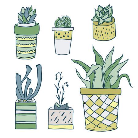 houseplants: Cute hand drawn terrariums, houseplants and succulents in pots. Vector set.