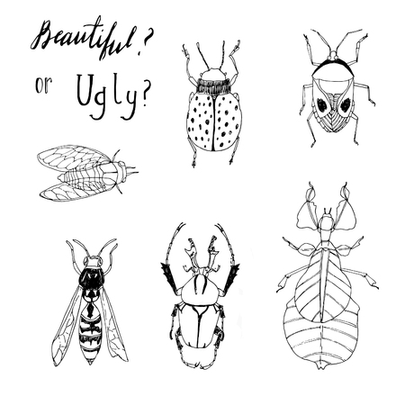stick bug: Insects seamless vector pattern. Nature beauty.