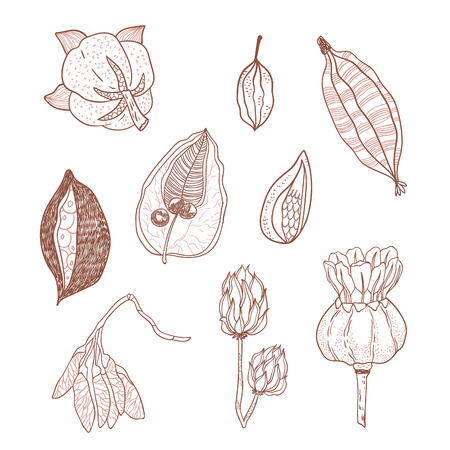milkweed: Outline vector set with seeds and seed pods in autumn colors. Organic natural shapes.