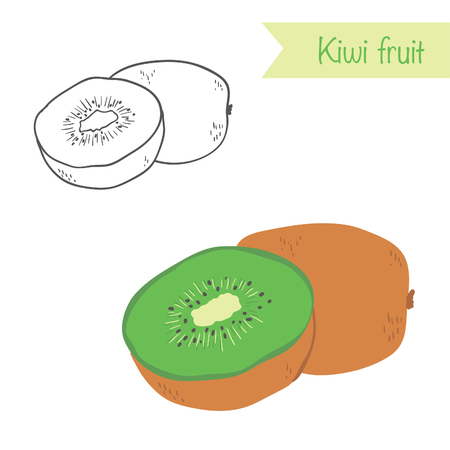 kiwi fruit: Hand drawn outlined and colored vector kiwi fruit