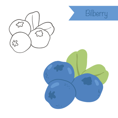 Hand drawn outlined and colored vector bilberry