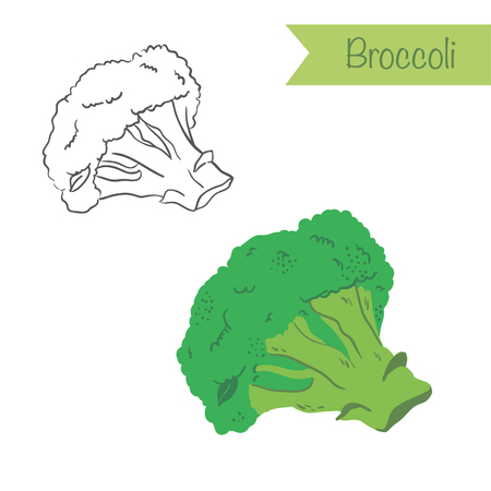 Hand drawn outlined and colored Broccoli
