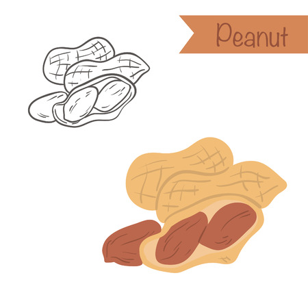 Hand drawn outlined and colored Peanut