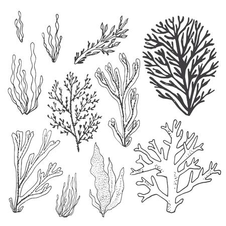 Trendy summer seaweed design. Ilustrace
