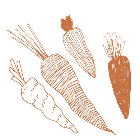 Seasonal autumn vegetables. Hand drawn vector set. Carrots