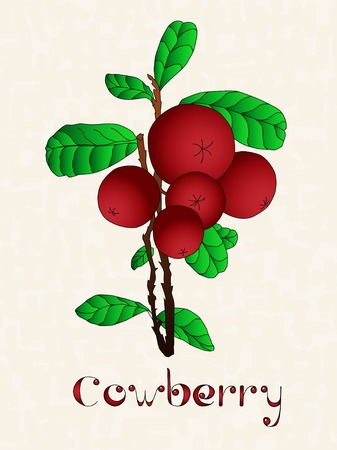vitis: Lingonberry or cowberry (Vaccinium vitis idaea). Cranberries with green leaves over art grunge background.