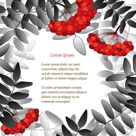 Background with rowan berries, leaves and place for your text. Black and white version. Vector