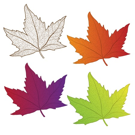 yelllow: Collection beautiful colorful autumn leaves isolated on white background. Series of image template leaf design.