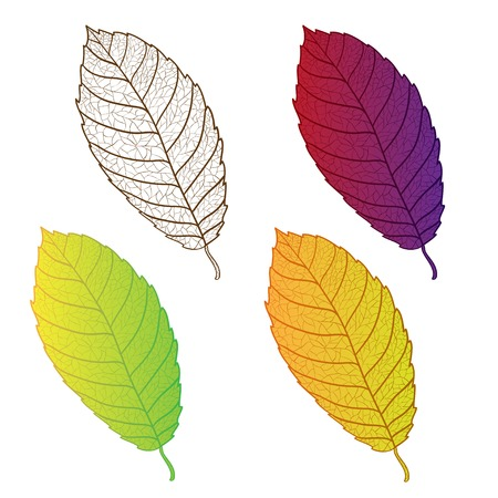 yelllow: Collection colorful autumn leaves isolated