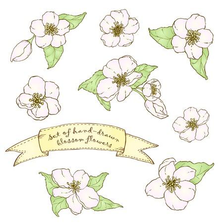 Set of hand drawn apple (cherry) blossom flowers. Vector