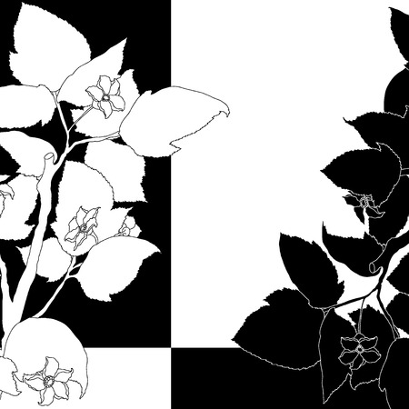Black and white background with flowering apple tree. Vector