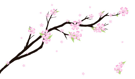 Background with stylized cherry blossom. Vector