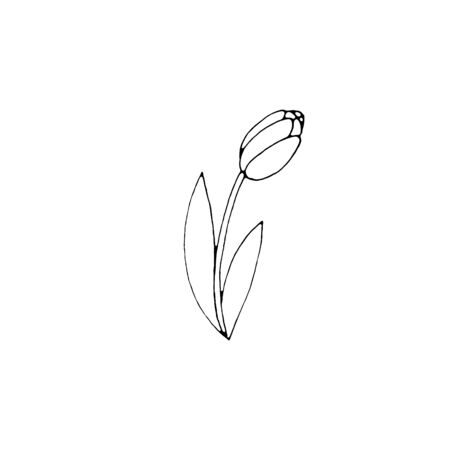Outline of Tulip flower isolated on a white background. Hand-drawn design element. Simple black and white sketch style Doodle illustration. Reklamní fotografie
