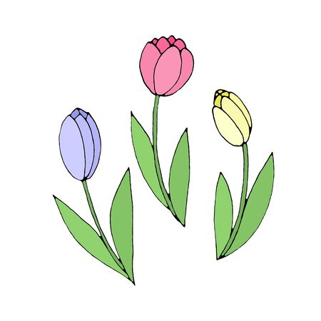 Color Tulip flower isolated on a white background. Hand drawn design element. Simple sketch style Doodle illustration.