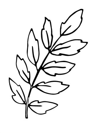 Rowan branch with leaves, freehand drawing, nature element in doodle style, coloring book, black outline. Vector hand drawn illustration isolated on white background.