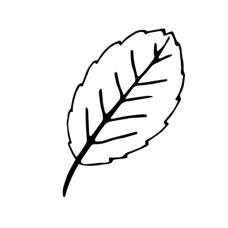 Simple abstract vector leaf. Freehand drawing, nature autumn element in doodle style, coloring book, black outline. Hand drawn illustration isolated on white background.