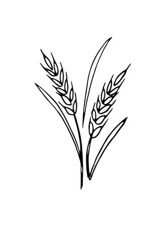 Vector doodle spikelet of wheat isolated on white background. Illustration