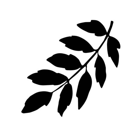 Rowan branch with leaves, freehand drawing, nature element, black silhouette. Vector hand drawn illustration isolated on white background.