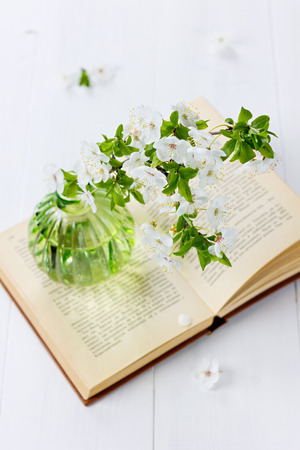 bookish: Beautiful blossom branch of cherry-tree in a glass vase with open vintage book on a white background