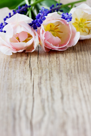cut flowers: Pink tulips and blue hyacinths on a rustic wooden table