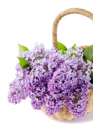 Lilac flowers in basket isolated on white photo