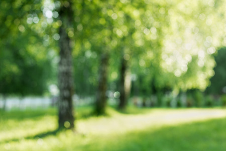 backdrops: Summer birch out of focus, natural bokeh background Stock Photo