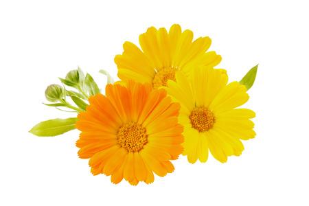 carotenoid: flowers calendula isolated on white background Stock Photo