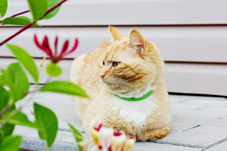 imperturbable: red thoughtful cat sitting on the road and looking into the distance Stock Photo