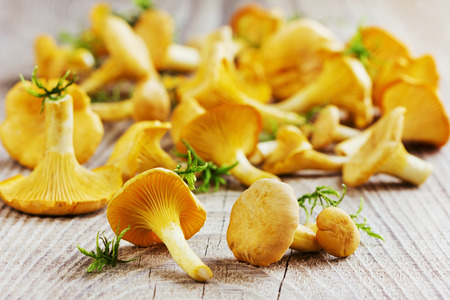 cantharellus cibarius: yellow chanterelle (cantharellus cibarius) on a rustic wooden background Stock Photo