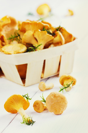 cantharellus: yellow chanterelle (cantharellus cibarius) on a white wooden background Stock Photo