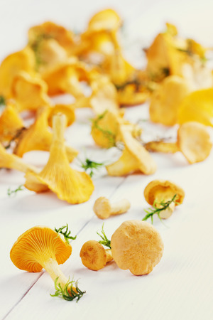 cantharellus cibarius: yellow chanterelle (cantharellus cibarius) on a white wooden background Stock Photo