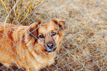 pooch: red dog pooch with sad eyes behind wire mesh, animal protection concept Stock Photo