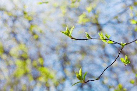 young spring twig with green leaves against blue sky, lovely landscape of nature, new life, selective focus photo