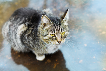 catlike: stray cute kitten sitting in a puddle in the rain Stock Photo