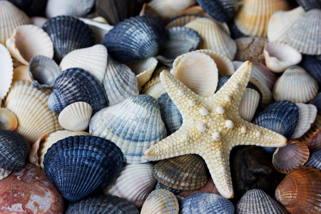 Starfish and seashells collection, can be used as a background photo