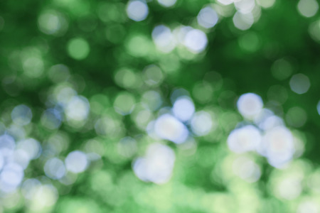 diffused: abstract natural green background, defocused leaves, bokeh