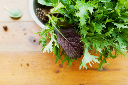 mustard leaf: New crop fresh organic mix salad leaves with mizuna, lettuce, pakchoi, tatsoi, kale, spinach and leaf mustard Stock Photo