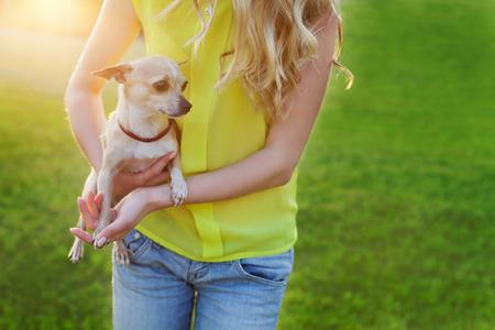 cane chihuahua: ragazza glamour o donna con simpatico cane cucciolo di chihuahua sul prato verde sul tramonto, persone animali domestici concetto, belle luci della sera