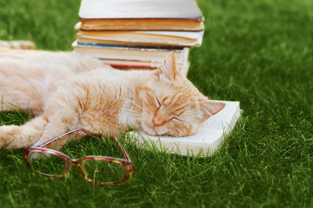 catlike: Cute cat with book and glasses sleeping on green grass, funny pet