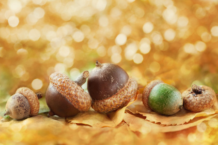 oaken: Autumn background with acorns, leaves and fantastic bokeh with copy space for your text, selective focus Stock Photo