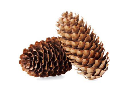 cone: Conifer cone, fir cone or fir apple on white background