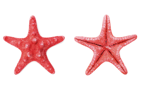 fish water: Red starfish or sea star on white background, top view Stock Photo