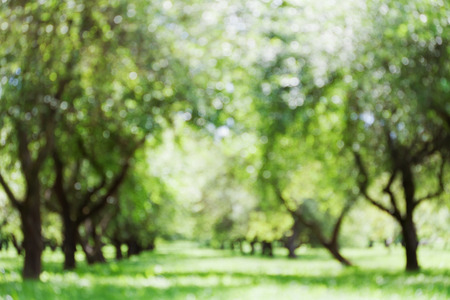 suolo: Defocused park or garden for bokeh background, blurred alley of trees, morning light, parkland, green color