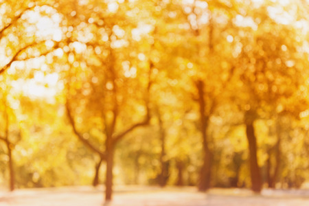 out of focus: Yellow autumn trees out of focus. Abstract bokeh backdrop. Natural blurred background of fall park or garden.