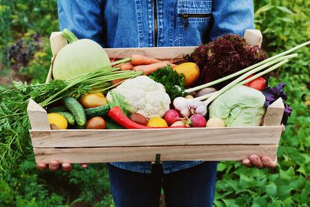 Le fermier tient dans ses mains une boîte en bois avec une culture de légumes et une récolte de racine sur le fond du jardin. Alimentation biologique.