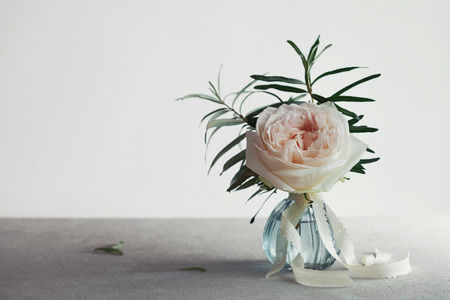 luz natural: Rose in vase against light background, beautiful flower, vintage card. Copy space for text. Foto de archivo