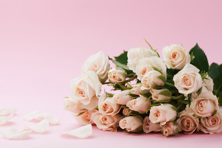 Rose flower on pastel pink background. Beautiful greeting card. Copy space for text.