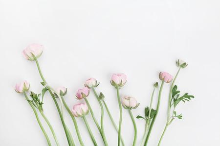Schöner Frühling Ranunculus blüht auf weißer Tabelle von oben. Blumenrand. Hochzeitsmodell. Pastellfarbe. Säubern Sie Platz für Text. Flache Laienart.