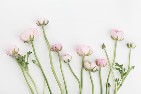 color background: Beautiful spring Ranunculus flowers on white background from above. Floral border. Pastel color. Wedding mockup. Clean space for text. Flat lay style. Stock Photo