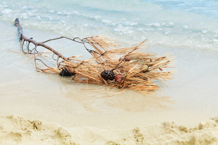 Dry pine branches with cones washed up on the sea shore after breaking wave. Banco de Imagens